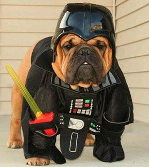 chien Star Wars 3