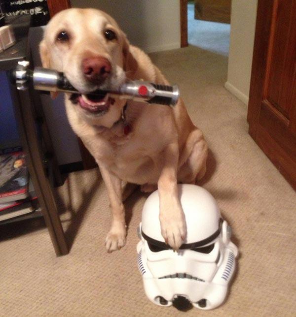 chien Star Wars 4