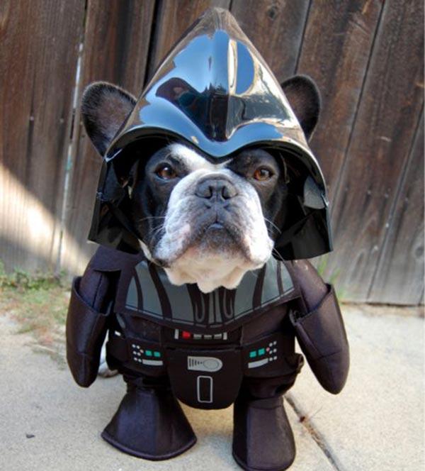 chien Star Wars 5