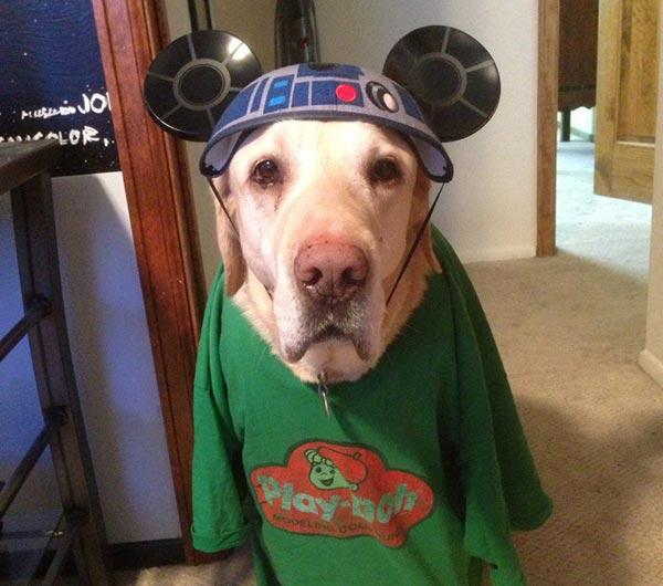 chien star wars 6