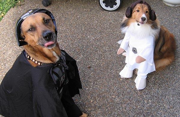 chien star wars 8