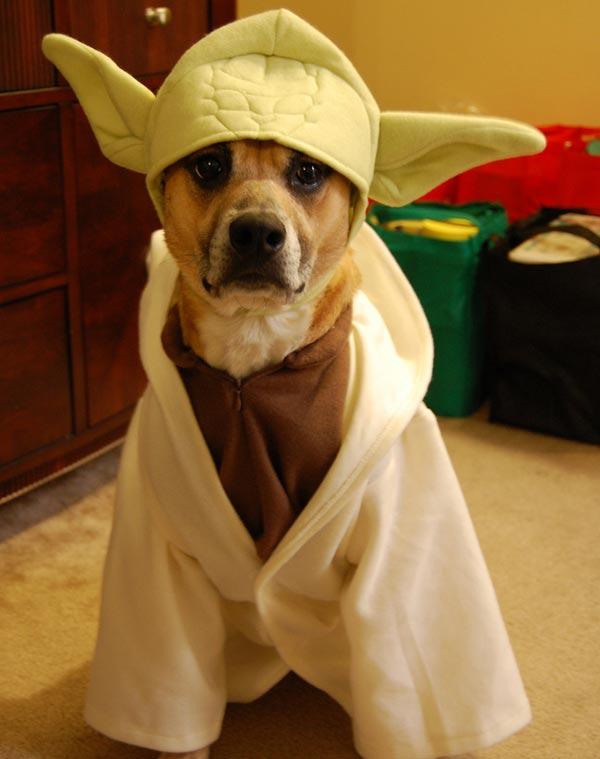chien Star Wars 9