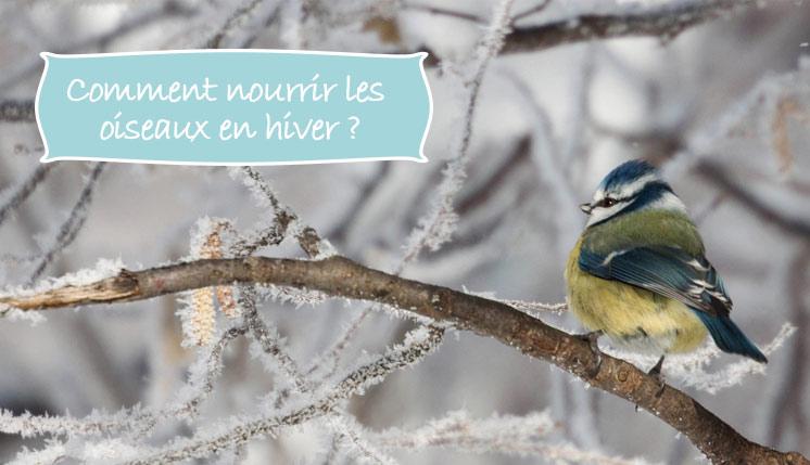 comment nourrir les oiseaux-hiver