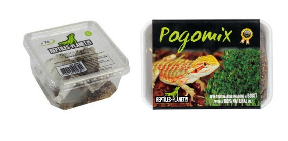 alimentation Agame barbu