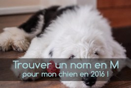 Noms de chien commençant par la lettre M pour 2016
