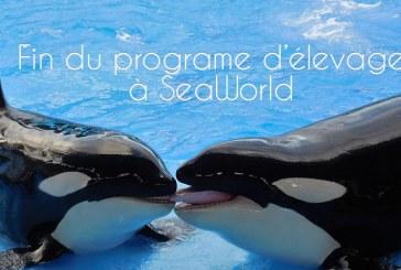 SeaWorld renonce à son programme d'élevage d'orques