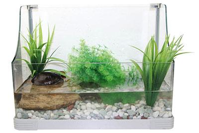 Aqua-terrarium-Reptiles-Planet