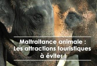 Maltraitance animale : les attractions touristiques à éviter !