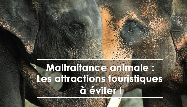 maltraitance animale : les aatractions touristiques à éviter
