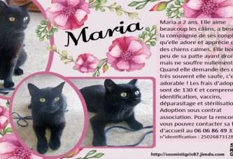 Maria, petit chat noir à adopter
