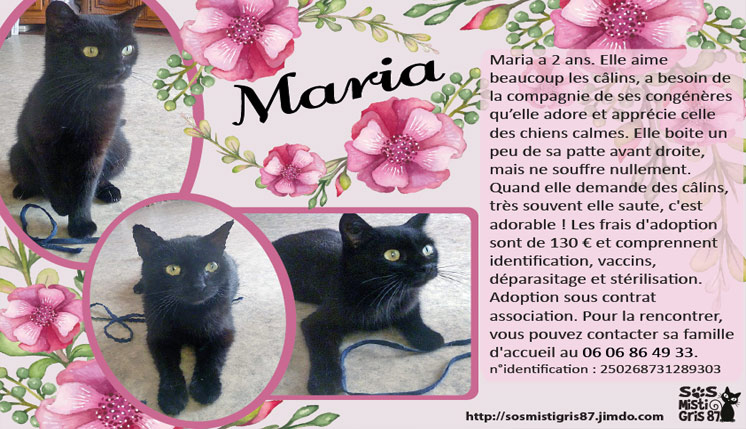 Maria, chat à l'adoption
