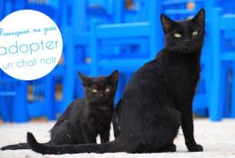 Pourquoi ne pas adopter un chat noir ?