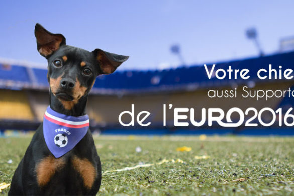 Chien supporter de l'Euro 2016