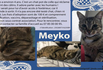 Meyko, chat à adopter