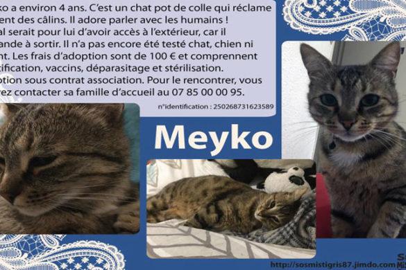 Meyko chat à l'adoption