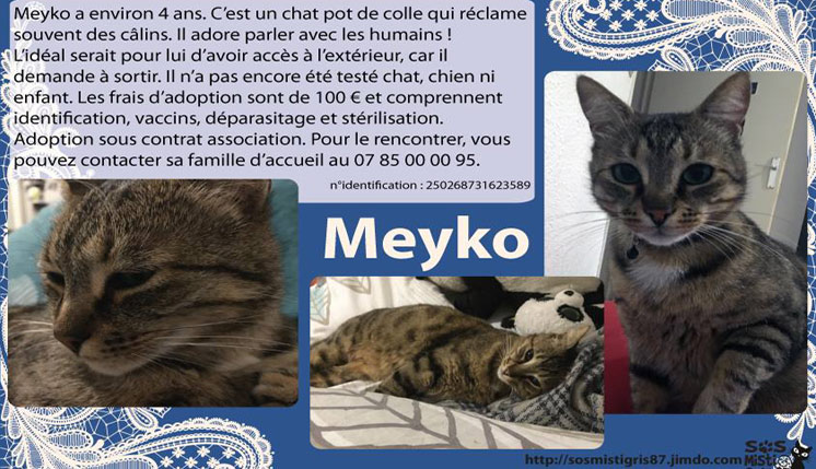 Meyko chat à l'adoption