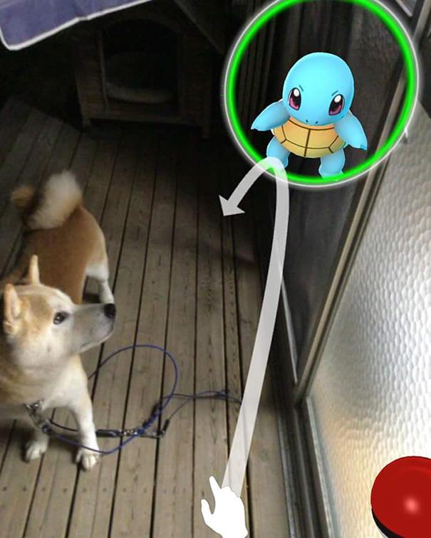 Les animaux peuvent voir les pokemons