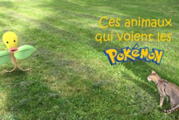 Les animaux verraient-ils les pokemons de Pokemon Go ?