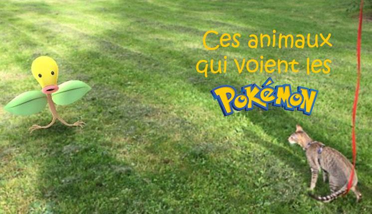Ces animaux qui voient les pokemons