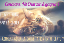 [Concours ] La cohabitation entre chat : Kit chat zen à gagner pour les vacances