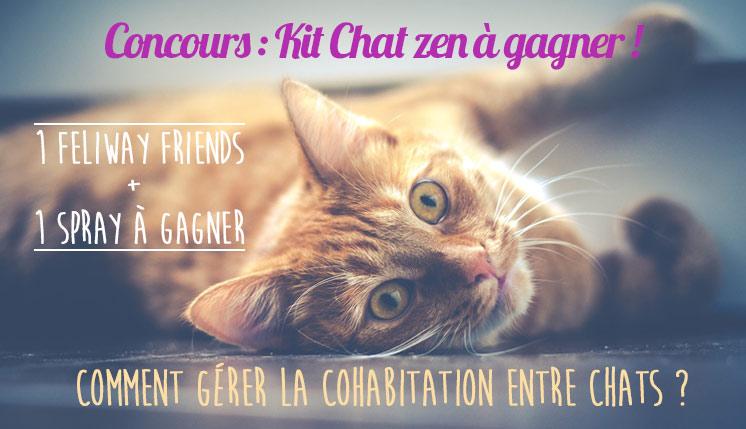 concours feliway - Cohabitation entre chat