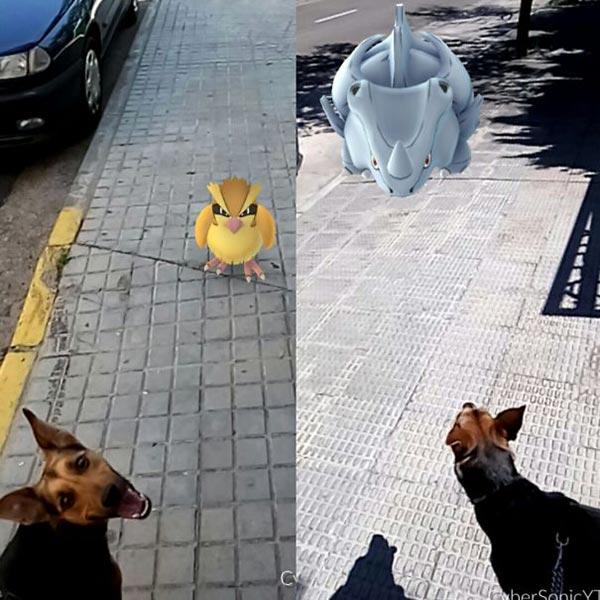 pokLes animaux voient les pokemons