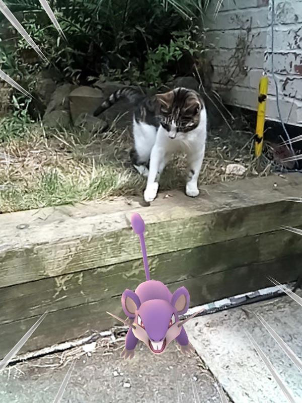 Ratata vs chat