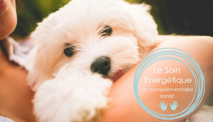 Soin énergétique pour animaux