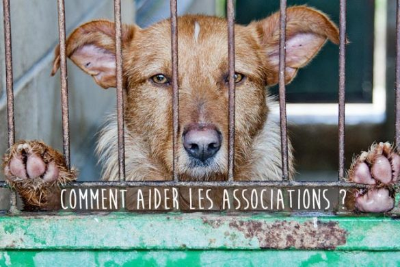 Comment aider les associations de protection animales