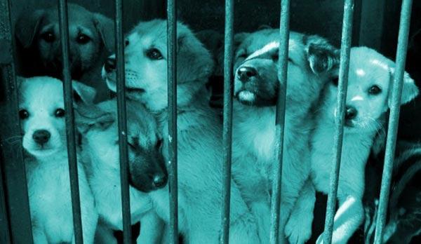 Trafic d'animaux en animalerie