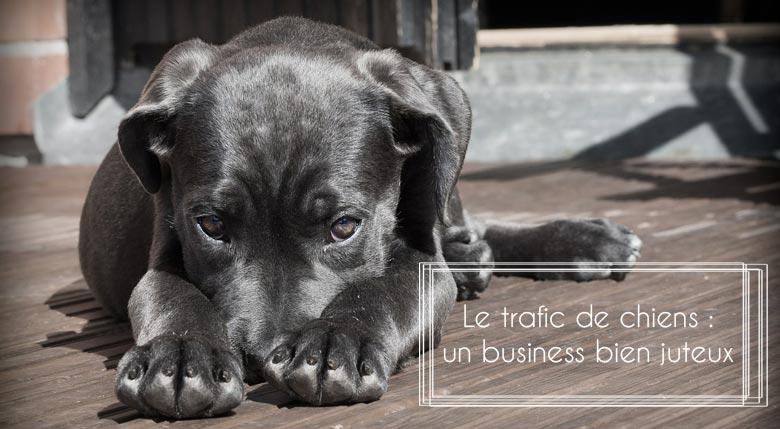 trafic de chien