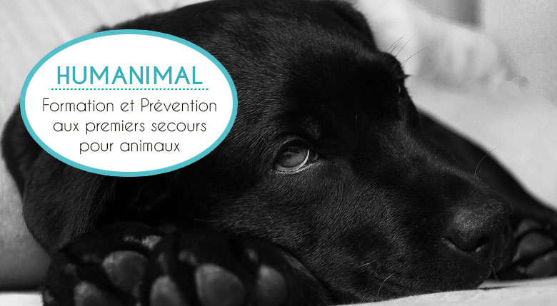 Humanimal, formation premier secours animal