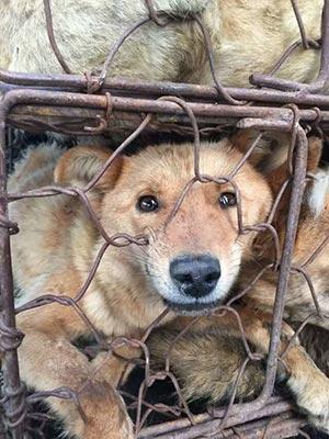 chien festival yulin