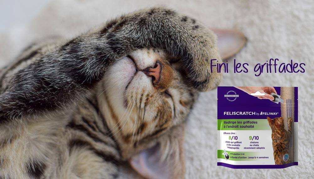 feliscatch by feliway