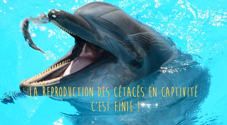reproduction des dauphins en captivite finie