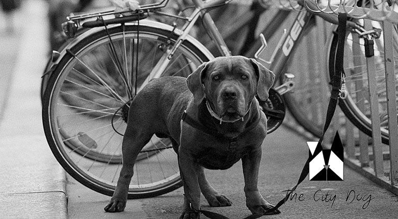 the city dog conciergerie pour animaux