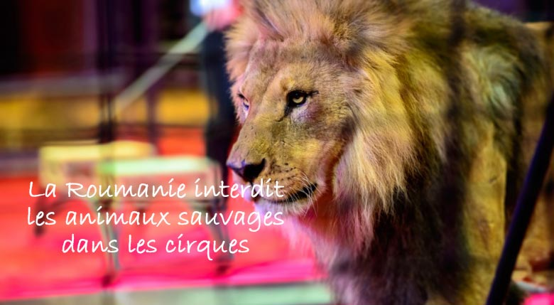 cirque animaux sauvages