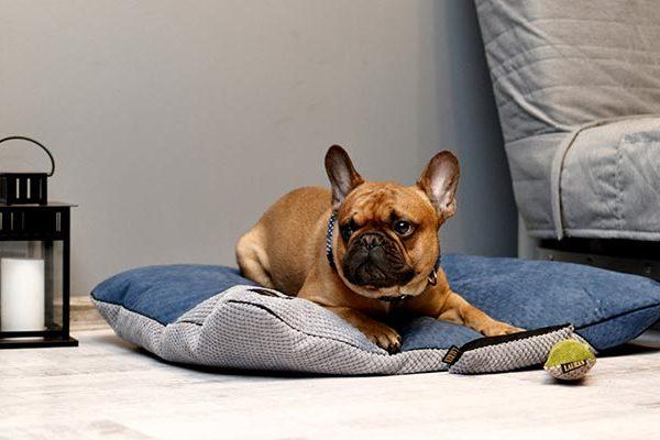 coussin confortable pour chien
