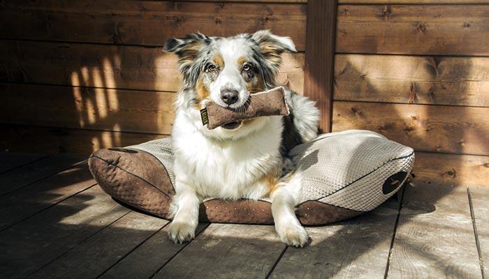 coussin design qualite chien