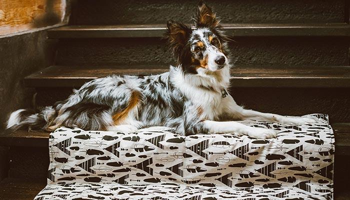 couverture chien bohème