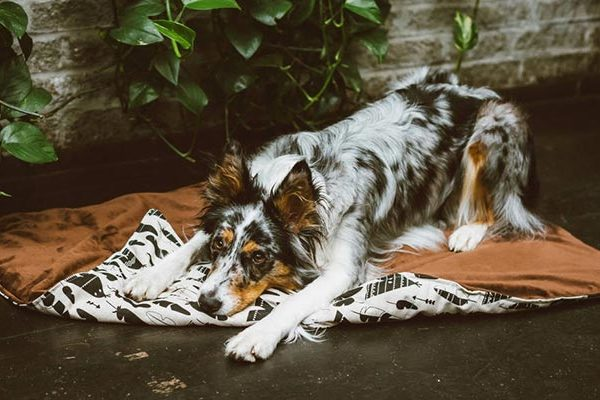 couverture chien boho