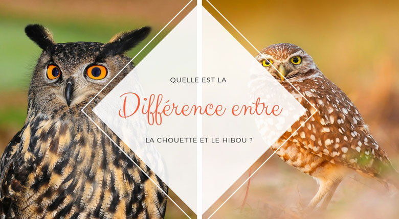 différence chouette hibou