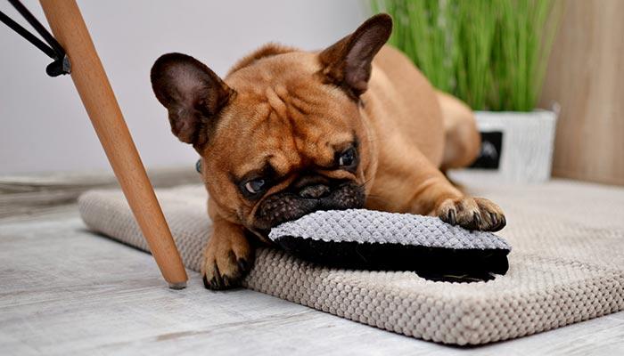 matelas petit chien