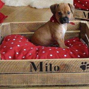 Panier pour chien en bois recyclé