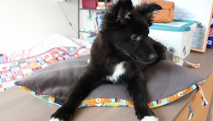 tapis polaire transport chien