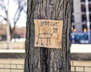 chat perdu signe