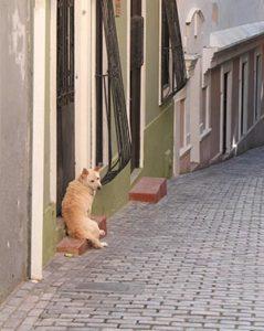chien perdu en ville