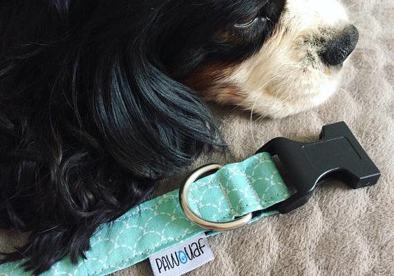 chien collier bleu écaille
