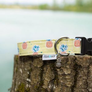 collier chien ananas