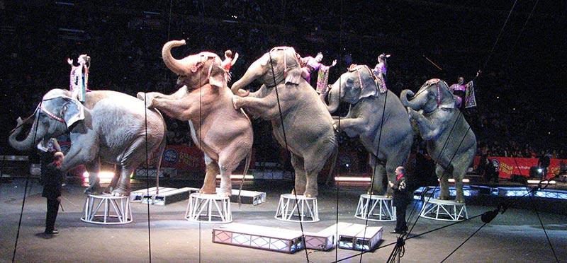 éléphant cirque